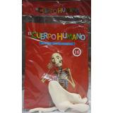 Cuerpo Humano Rba - Esqueleto N8-9-13-14-15-17-18-19-20