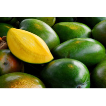 Frutales Mango Keitt Injerto Mas De 1 Metro