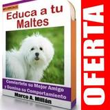 Guia De Entrenamiento Para Perro Maltes 4