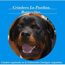 Criadero La Paulina Anuncia 2 Excelentes Machos En Stud.
