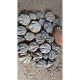 Fosiles Marinos
