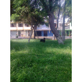 Rottweiler Para Monta