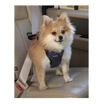Pechera De Seguridad Para Auto Solvit Chica Paseo Perro