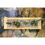 Mini Jardines - Maceta - Plantas Suculentas - Nasci Natural