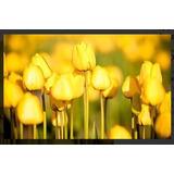 10 Sementes De Lindas Tulipas Amarelas Para Mudas *****