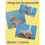 Cachorro Criollo En Adopción