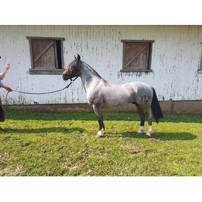 Coberturas Cavalo Crioulo Joio Da Maior (dose Semen)