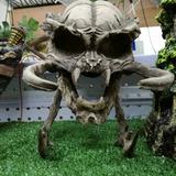 Craneo Depredador Figura De Resina Para Acuario 35x20x15cm