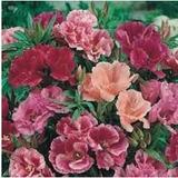 400 Sementes Da Flor Godétia Azaléia Sortida+frete Gratis