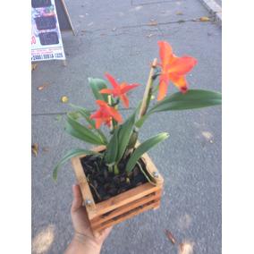 Cachepô De Madeira Rustico 15x15cm, Para Orquídeas