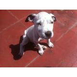 Cachorros En Adopcion (urgente)