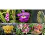 Lote De Orquideas Terrestres 15 Plantas Diferentes Oferta!