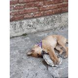 Cachorra En Adopcionn