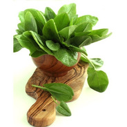 100 Sementes De Azedinha Folhas Grandes Rumex Acetosa Erva