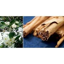 Arbol De Canela,cinnamomum Zeylanicum O Cinnamomum Verum