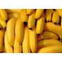 Muda Banana Nanica (rizoma) Melhor Preço.