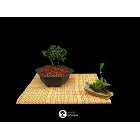 Bonsai Natural, Carmona O Te De Fukien