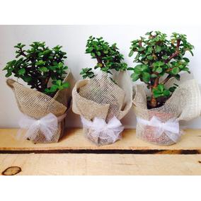 Planta Arbol De La Abundancia Eventos Recuerditos Regalito