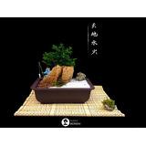 bonsai naturales premna en roca jardin zen