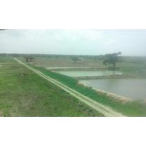 Rancho En Renta,venta Veracruz Para Acuicultor O Ganaderia