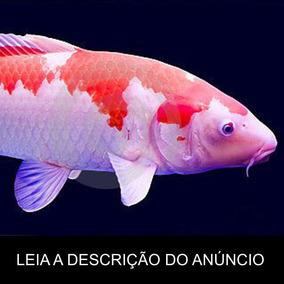 carpa peixes no mercado livre brasil