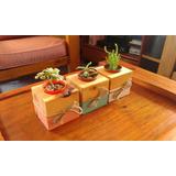 3 Mini Porta Macetas Woody Single Con Cactus O Suculenta