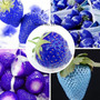 Sementes De Morango Azul Raro Exótico P/muda Horta Jardim