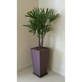 Plantas Decoración De Interiores