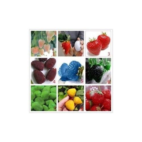 500 Sementes De Morangos Coloridos Importado