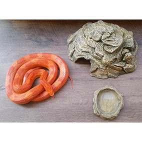 Toca M + Bebedouro P - Corn Snake - Répteis