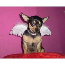 Disfraz De Alas De Angel Para Mascota Perro Gato