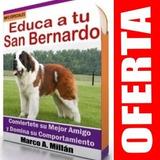 Guía De Entrenamiento Para Perro San Bernardo 2