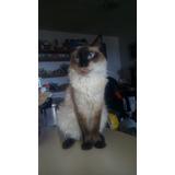 Gatico En Adopción - Gatico Mascota Adopta