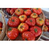 Semillas De Tomate Limachino+ Biblia Del Horticultor 300 P