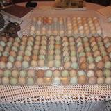 Huevos Cafe Y Rosados