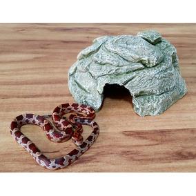 Kit1 Corn-snake / Leopard Gecko P - Para Filhotes