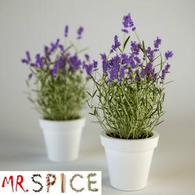 Lavanda Verdadeira Alfazema 200 Sementes Flor Para Mudas