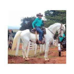 Cavalo Árabe X Quarto De Milha