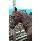 Jaquimon Corrector, Horse Halter Cabezal Caballos