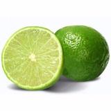 Excelentes Mudas De Limão Galego