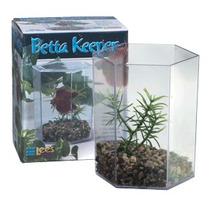 Betera Hexagonal C Planta Y Grava Lees Bettas Beta Acuarios