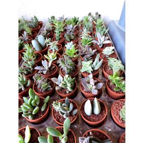 Recuerdos 50 Plantas Maceta 3cm, Recuerdos Útiles