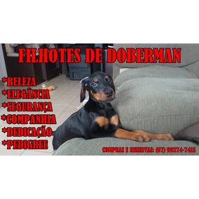 Lindos Filhotes De Doberman
