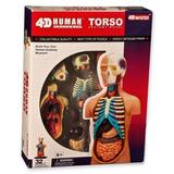 3d Puzzle 4d Vision Anatomía Humana Mod. Nº01 Cuerpo Humano