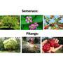 Combo Árboles Matas Frutales Para Jardín +guia De Cuidados
