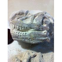 Kit De Excavación Cráneo De Dinosaurio Réplica A Escala