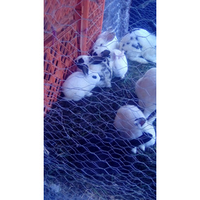 Se Venden Conejos