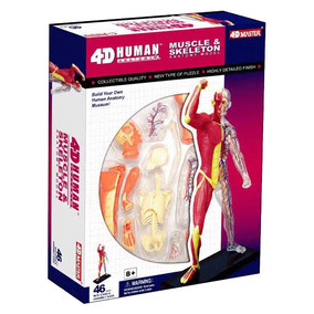 4d Master Modelo Anatómico Muscular-esqueleto 4d Vision