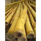 Varas De Bambu Mayoreo Con Envío Gratis