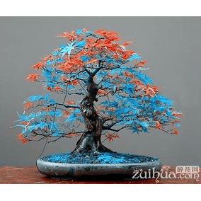 Sementes De Árvore Bonsai 20 Sementes